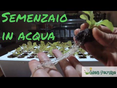 Idroponia semplice per sviluppare i semi e le piantine da trapiantare