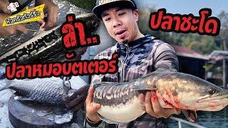 ล่าสด! ปลาหมอบัตเตอร์ & ปลาชะโด [หัวครัวทัวร์ริ่ง] EP.31