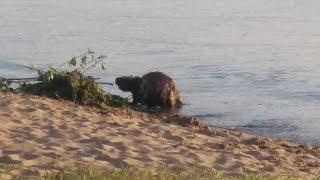 Fiksuoja kauniečiai: Kauno marių paplūdimyje - neįprastas gyvis