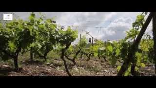 Quinta da Pacheca: o verdadeiro espirito do Douro