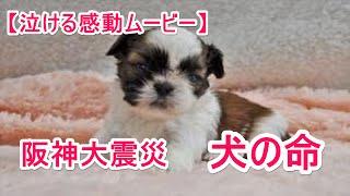 泣ける話・感動する話阪神大震災命の犬涙腺崩壊