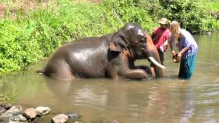preview picture of video 'Washing Elephant'