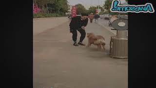 Самое популярное видео в интернете ♥ Забавные животные ♥ Забавные моменты с собаками, кошками и жив