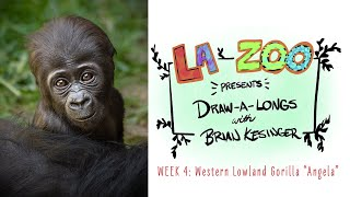 Endangered Species Draw-Along with Brian Kesinger: Western Lowland Gorilla
