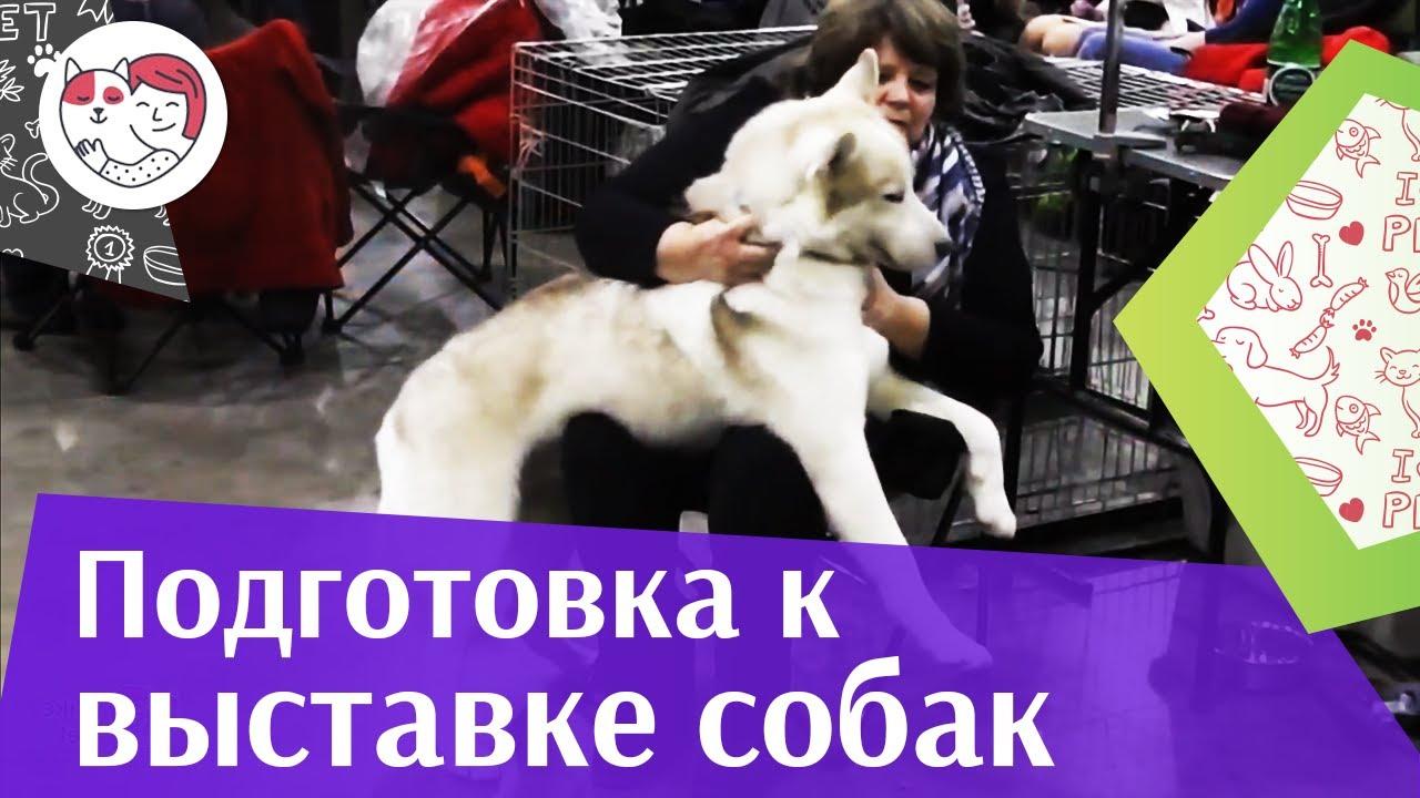 Выставка собак. Как собраться? Что взять с собой? Инструкция