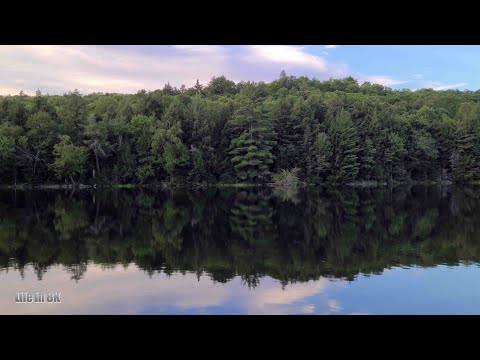Life in 8K - The calm and serene lake waters of the Algonquin forest