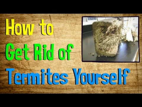 Video How to Get Rid of Termites Yourself | BEST Treatment for Getting Rid of Termites