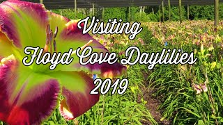 Visiting Floyd Cove Daylilies 2019