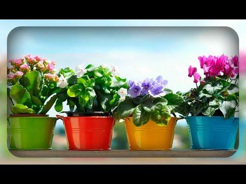 Шикарные комнатные цветы. Домашние подкормки
