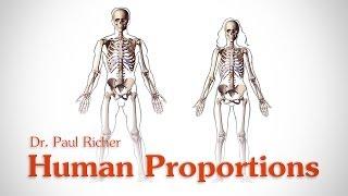Human Figure Proportions - Average Figures - Dr. Paul Richer