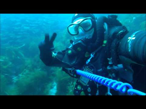 Scuba Diving with Seals Coronado Islands Mexico