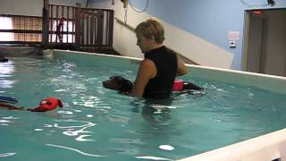 preview picture of video 'Dog enjoys learning how to swim at Healing Waters in Canton, OH!'