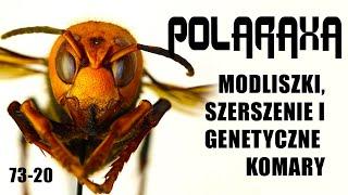 Polaraxa 73-20: Modliszki, szerszenie i genetyczne komary