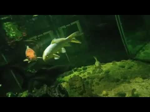 fish box aquarium