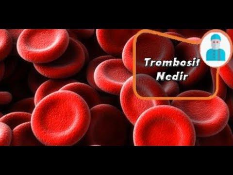 Trombosit düşüklüğü nedir Belirtileri nelerdir trombosit düşünce ne olur