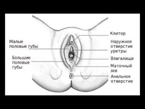 Правда ли, что чем клитор больше, тем легче достичь оргазма?