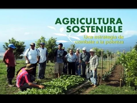 Agricultura sostenible, una estrategia de combate a la pobreza