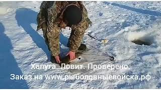 Ловля змееголова зимой на дальнем востоке