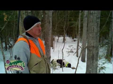 Feb. 18th OD: Coyote Hunt