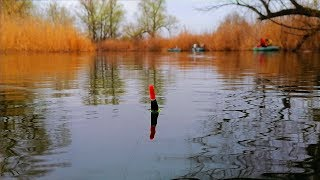 Рыбалка на поплавок незнакомый водоем самая уловистая наживка