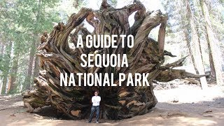 A Guide to Sequoia National Park