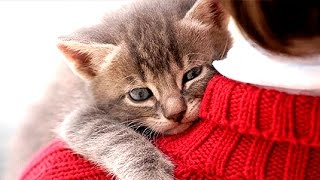 CATS LOVE THEIR HUMAN OWNERS  Compilation | Funnycat 12 - Video Youtube