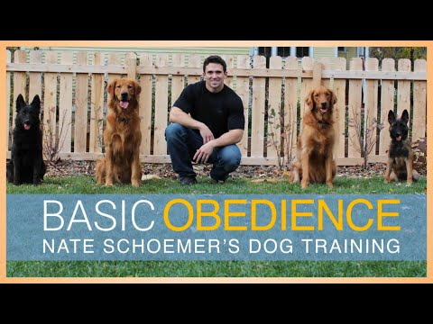 Basic Obedience Dog Training Course - FULL COURSE FREE on ...
