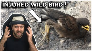 What to do when finding an injured wild bird [IRL Lessons]