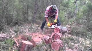 Cutting Jarrah down south.