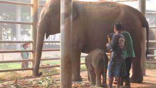 Big surprise at Elephant Nature Park!