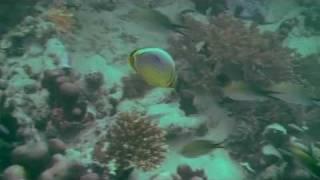 preview picture of video 'ScubaDo Snorkeling in Zanzibar'