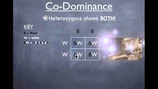 Genetics - Co-Dominance