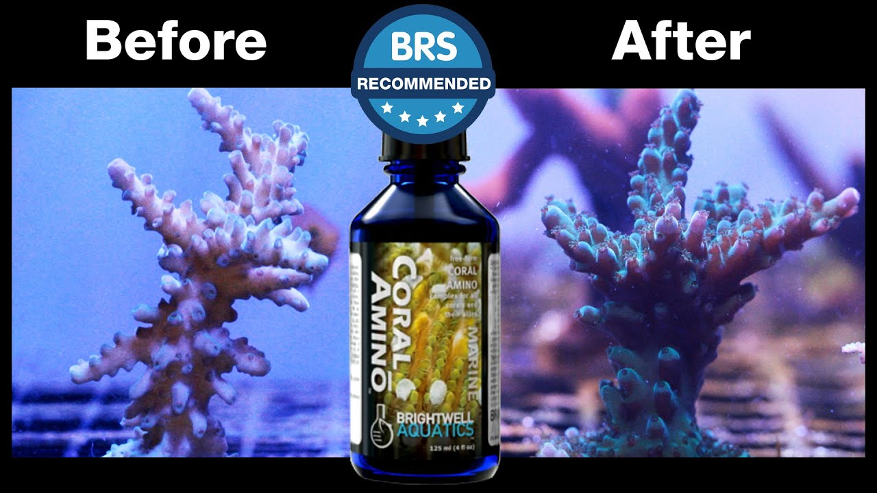 It's BRS Recommended - Brightwell Aquatics CoralAmino Supplement