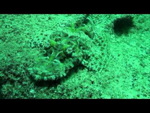 Palau Teil 1, Palau allgemein,Palau