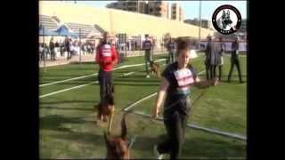 Egypt Sieger Show 1