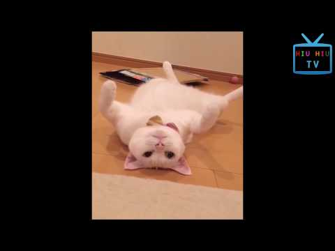 Funny Animal Mating - Super Funny Cats Compilation 2017 Part 2