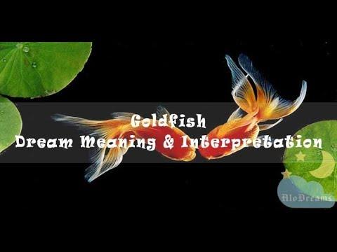 Goldfish - Dream Meaning & Interpretation