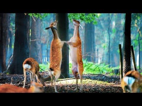 奈良公園【夏】かわいい子鹿たち