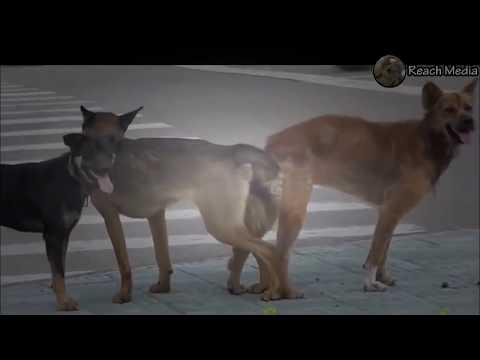 가장 재미있는 동영상 - 개 짝짓기 그룹 재미있는 동물 - YouTube