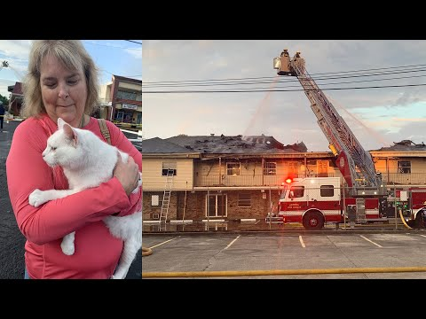 Cat reunited with owner during live interview outside fire