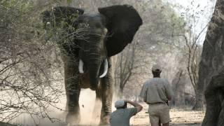 Fieldsports Britain – Elephants and clayshooting