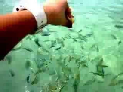 Isang lunas para sa mga uod hanggang sa 3 taon