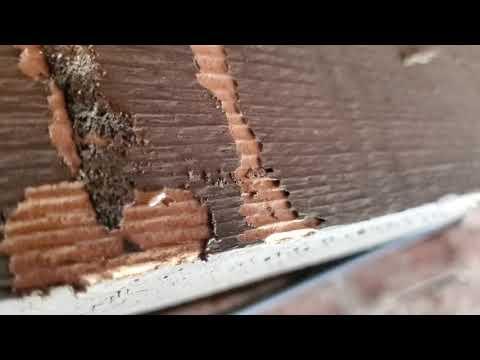 A Closer Look at an Eastern Subterranean Termite in Dayton, NJ