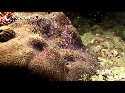 大開眼界~珊瑚產卵