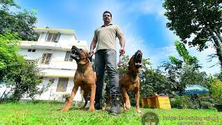 A companion dog trainer.