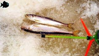 Рыбалка ягорка северодвинск