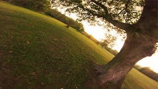 Under the canopy ???????? ~ proximity FPV Freestyle