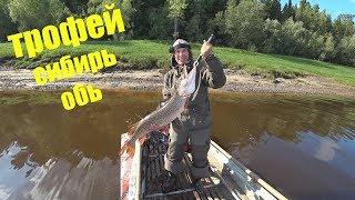 Свежая информация о рыбалке в хмао на оби