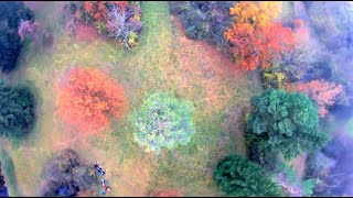 FPV autumn tree surfing in the woods 2020