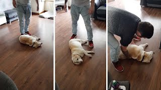 Dog Plays Dead To Stop Owners From Leaving Home